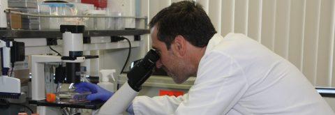 Un estudio en EE.UU. abre la puerta a curar un tipo de leucemia
