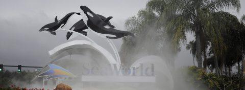 SeaWorld abrirá un parque temático sin orcas en Abu Dhabi en el año 2022