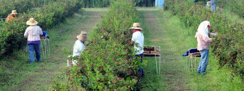 Organizaciones optan por educación para enfrentar redadas en campos agrícolas