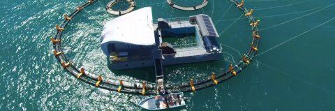 Mexican specialists build aquarium to save rare harbor porpoise
