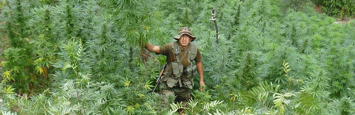 Peruvian Congress approves medicinal use of marijuana
