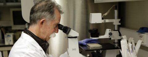 Microbios intestinales influyen en enfermos de cáncer ante la inmunoterapia