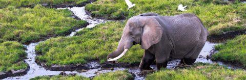 Trump revoca permiso para importar trofeos de elefantes a espera de revisión