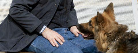 Universidad de EE.UU. avala uso de perros terapéuticos en cuidados intensivos