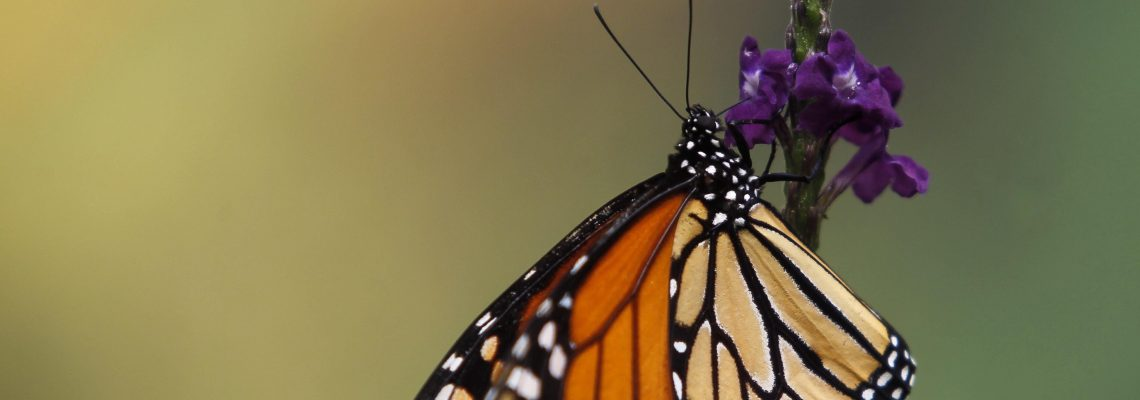Mexico City zoo celebrates Monarch Butterfly Month