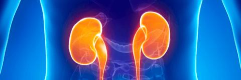 Cómo cubre Medicare la enfermedad renal