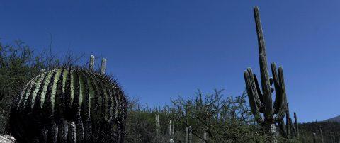 Tehuacán-Cuicatlán, patrimonio mundial en México, evidencia adaptación humana