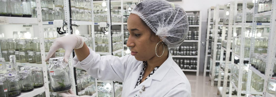 Seed bank aims to preserve floral riches of D.R.