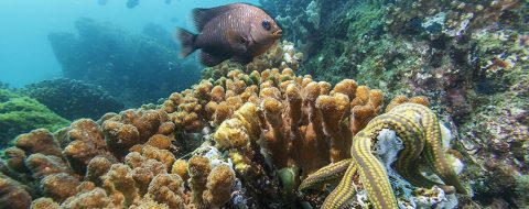 Coral reef conservation program implemented off Mexican Pacific coast