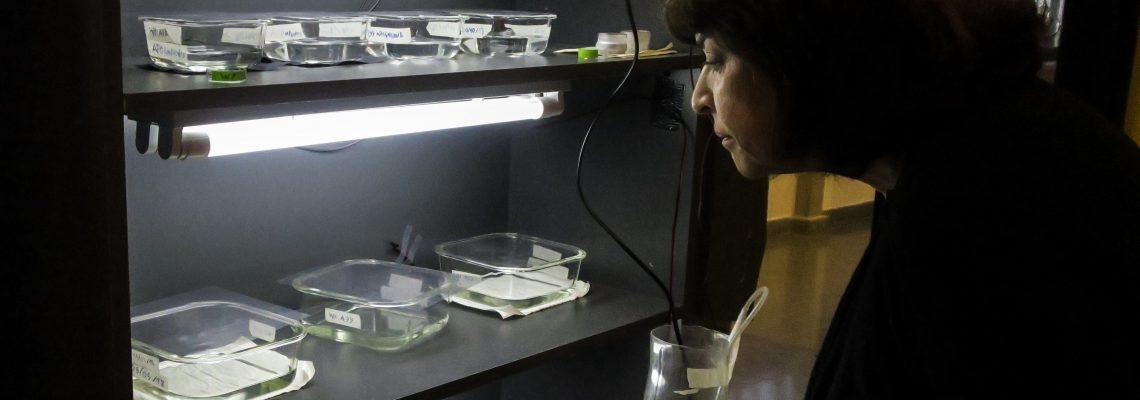 Chilean scientist creates photosynthetic skin