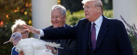 Trump ironiza con que demócratas llevarían a juicio a pavos de Acción Gracias