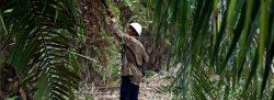"""La """"fiebre"""" del aceite de palma en Perú amenaza la Amazonía ancestral"""
