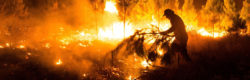 Chilean authorities battle 31 wildfires
