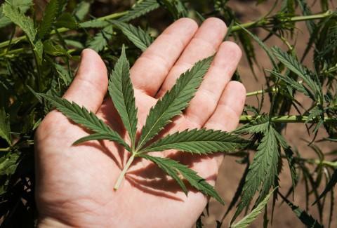 Desde Mi Perspectiva – La Marihuana en Estados Unidos