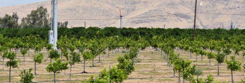 Proyecto con aviones no tripulados busca detectar sequías y proteger cultivos